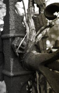Danbury Cemetery 6429