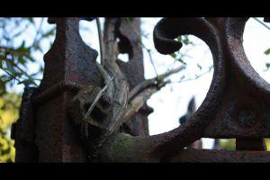 Danbury Cemetery 6431