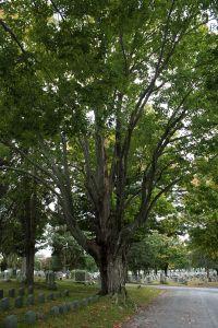 8891 Hope Cemetery, MA